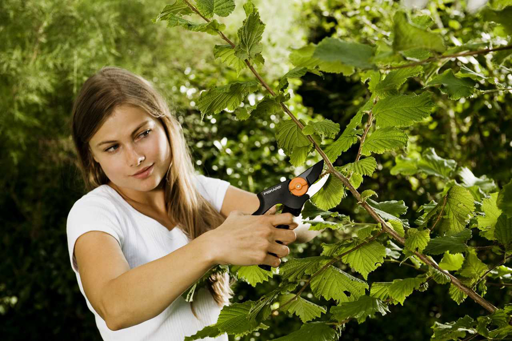 Hausmittel gegen blattl use for Balkonpflanzen gegen fliegen