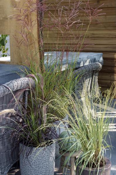 nicht alle k belpflanzen sind winterhart diy academy. Black Bedroom Furniture Sets. Home Design Ideas