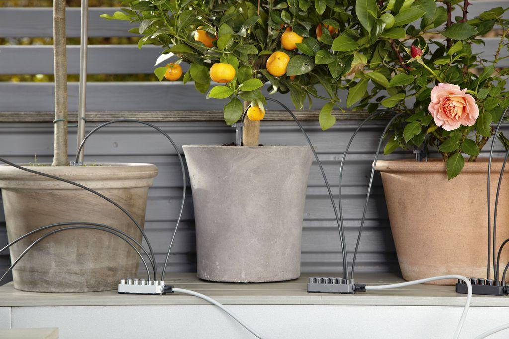 Tipps Und Tricks Für Deinen Mini-garten Kleiner Balkon Tipps Gestaltung Oase