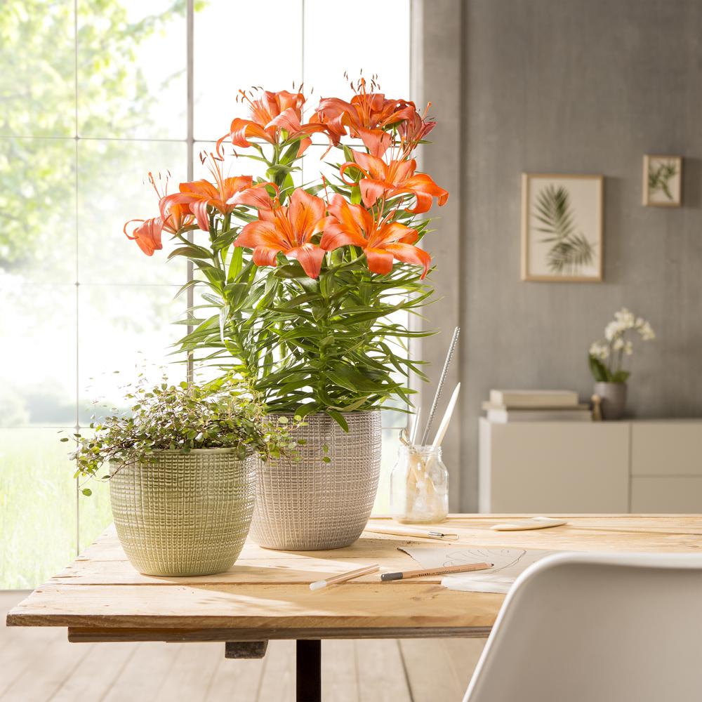 die richtige pflege f r zimmerpflanzen diy academy. Black Bedroom Furniture Sets. Home Design Ideas